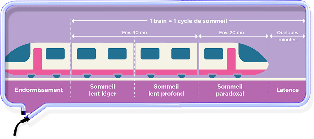 cycles sommeil